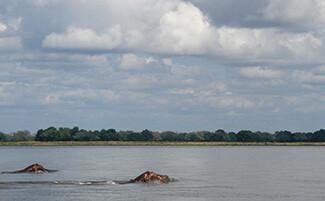 The Zambezi by canoe