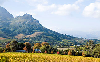 Stellenbosch, a piece of South African history
