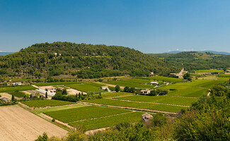 Along the roadside: the vineyards of the Luberon