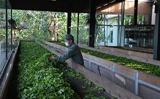 La fábrica del Bolian Tea Fazanda