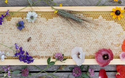 Biodiversity for Pollinators