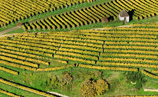 The Markgräflerland wine region