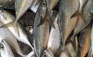 Los espléndidos mercados de pescado de San Sebastián