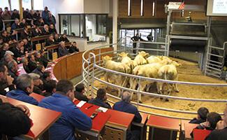 Viehmarkt in Saint-Christophe-en-Brionnais
