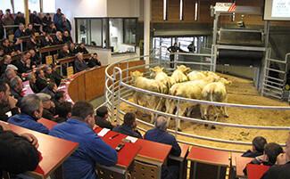 The Livestock Market, Saint-Christophe-en-Brionnais