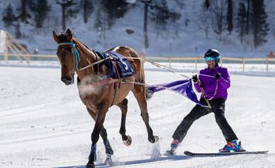 Introduction to Skijoring (La Clusaz)