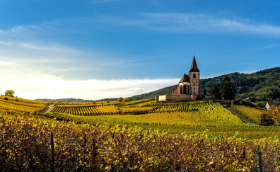 Visit Riquewihr, a village and two grands crus