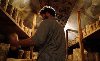 Fourme d'Ambert, um dos grandes queijos de Auvergne