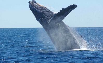 Baleines à tribord
