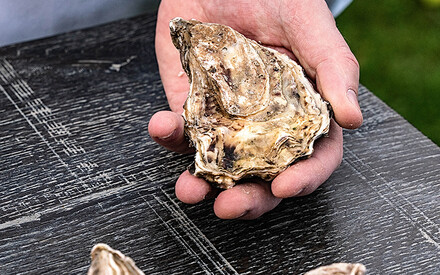 Let's eat oysters!