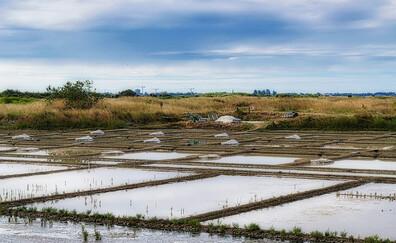Visit the salt marshes (Guérande)