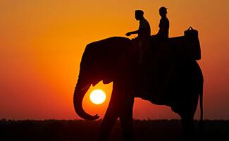 Safaris à dos d'éléphant