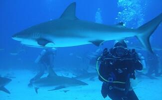 Shark diving, Cape Town