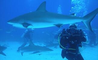 Mit Haien tauchen, Kapstadt
