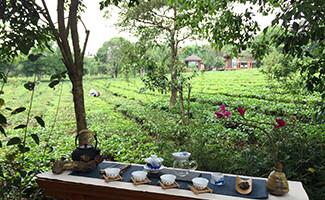 Ritual del té y baño en té Pu'er en el Bolian Resort and Spa, Jingmai