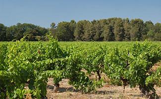 Les vignobles de Bandol