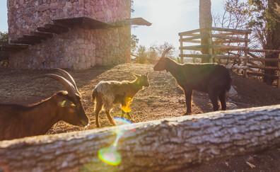 Visit the educational farm of Château Saint-Roux (Cannet-des-Maures)
