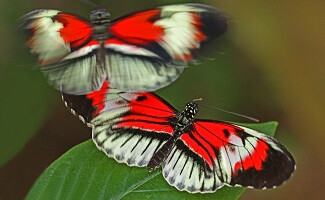 Unter Schmetterlingen, Fort Lauderdale