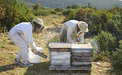 Discover the Castellet honey farm