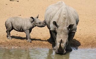 Safari in the Nambiti Private Game Reserve