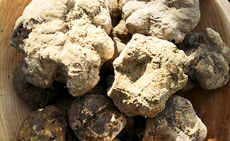Truffes blanches d'Istrie