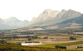 Winelands ou l'amour de la vigne