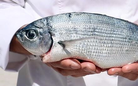 Fish Unknown |A Quinta da Auga, Spain |Capofaro Locanda & Malvasia, Italy |Elounda Mare Hotel, Greece