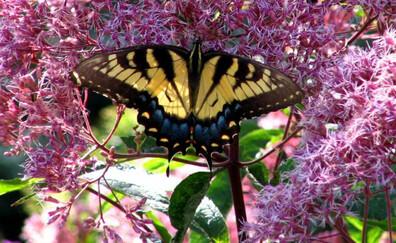 Highlands Biological Center, a plant paradise (Highlands, North Carolina)