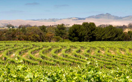 The Louise, inside the vineyards | of the Barossa Valley