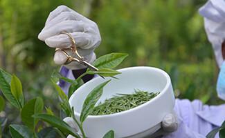 El jardín de té de Hundungoda