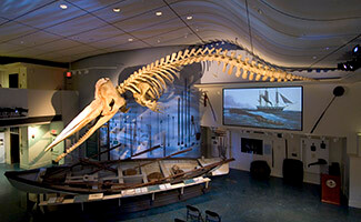 Nantucket and its Whale Museum