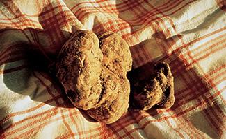 Umbrian black truffles