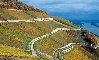 Se promener dans région viticole du Rheingau