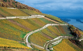 Walk through the Rheingau wine region