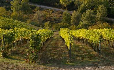 Along the Chianti Wine Route