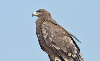 Discover birdwatching at the heart of the steppe