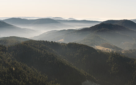 In Search of Bliss in the Black Forest