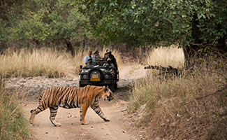 Meet tigers