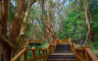 La foresta degli Arrayanes