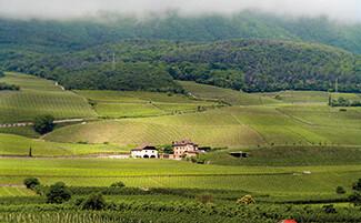Los vinos Manincor, Caldaro