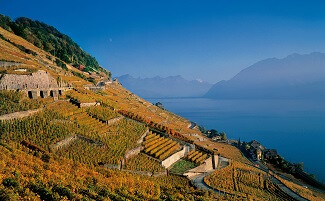 The vineyards of Lavaux