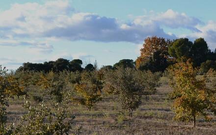 La saveur addictive de la truffe noire de Provence